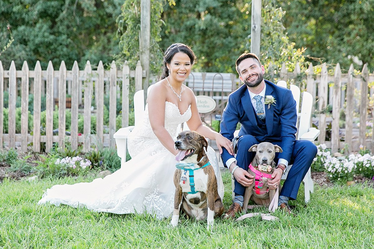 Dog photos by Wedding Photographer Leah Marie Photography + Stationery